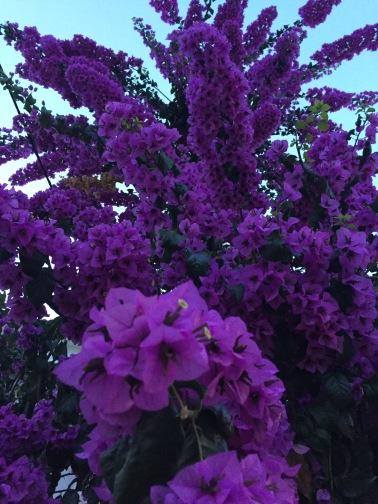 Beeindruckende Farbintensitäten der Blüten